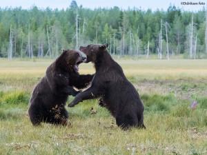 Bjørneråskap