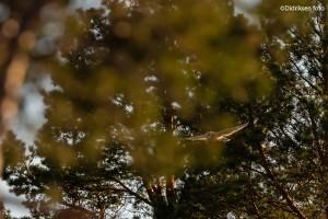 Jordugla i skogen