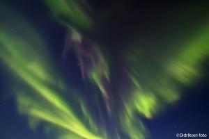 Nordlysets vingeslag